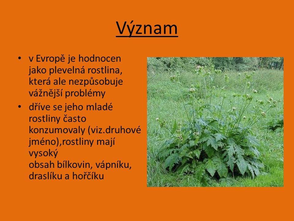 Význam v Evropě je hodnocen jako plevelná rostlina, která ale nezpůsobuje vážnější problémy.