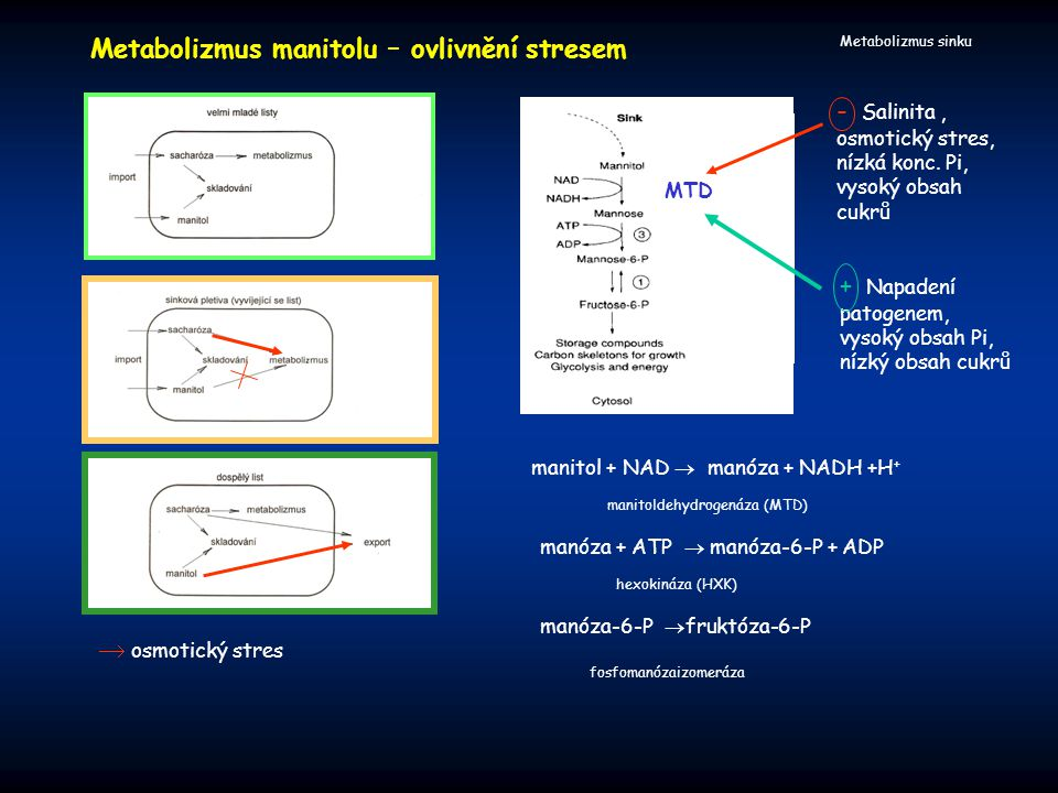 Metabolizmus manitolu – ovlivnění stresem