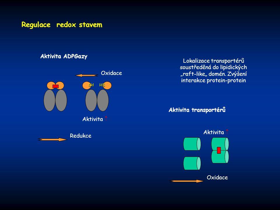 Regulace redox stavem Aktivita ADPGazy