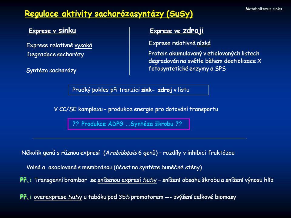 Regulace aktivity sacharózasyntázy (SuSy)