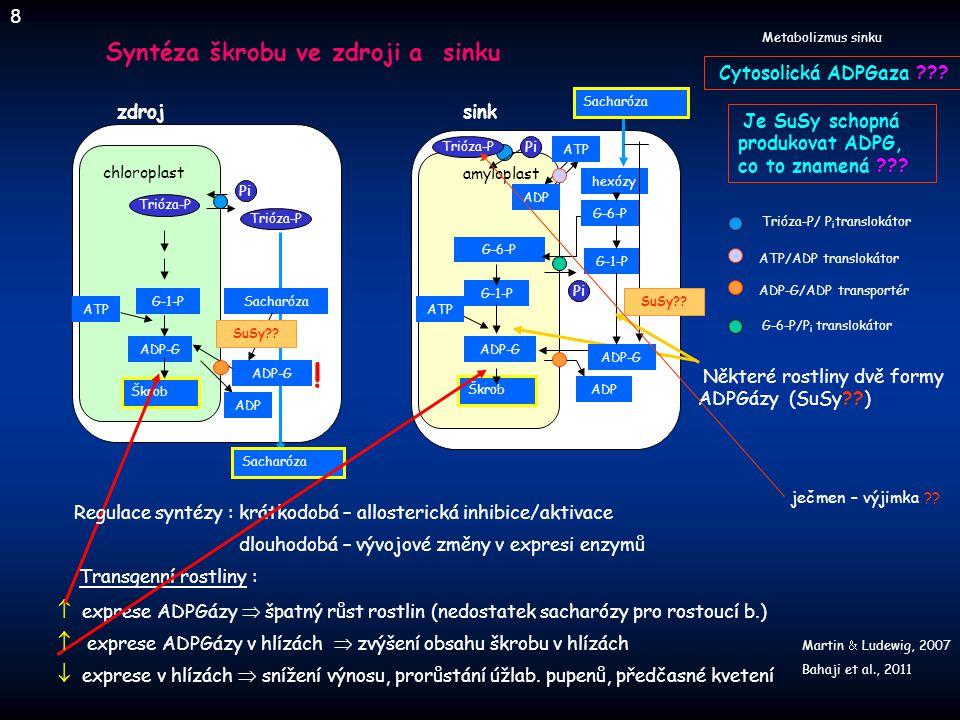 ! Syntéza škrobu ve zdroji a sinku
