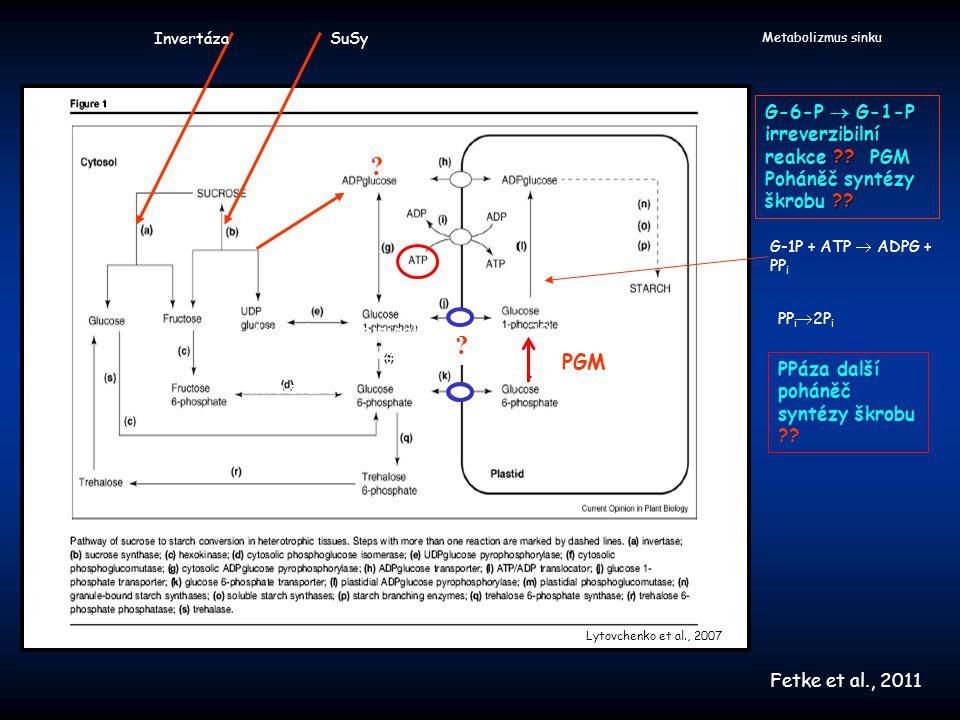 Invertáza SuSy. Metabolizmus sinku. G-6-P  G-1-P irreverzibilní reakce PGM Poháněč syntézy škrobu