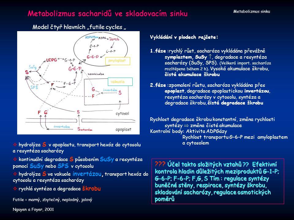 Metabolizmus sacharidů ve skladovacím sinku