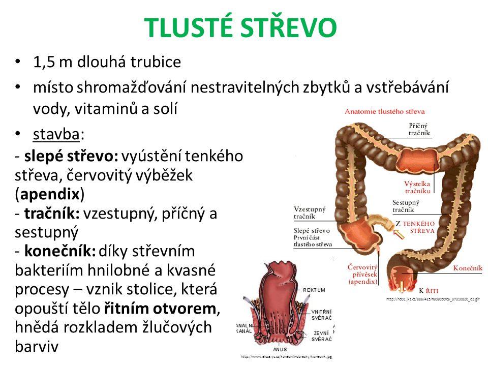 TLUSTÉ STŘEVO 1,5 m dlouhá trubice