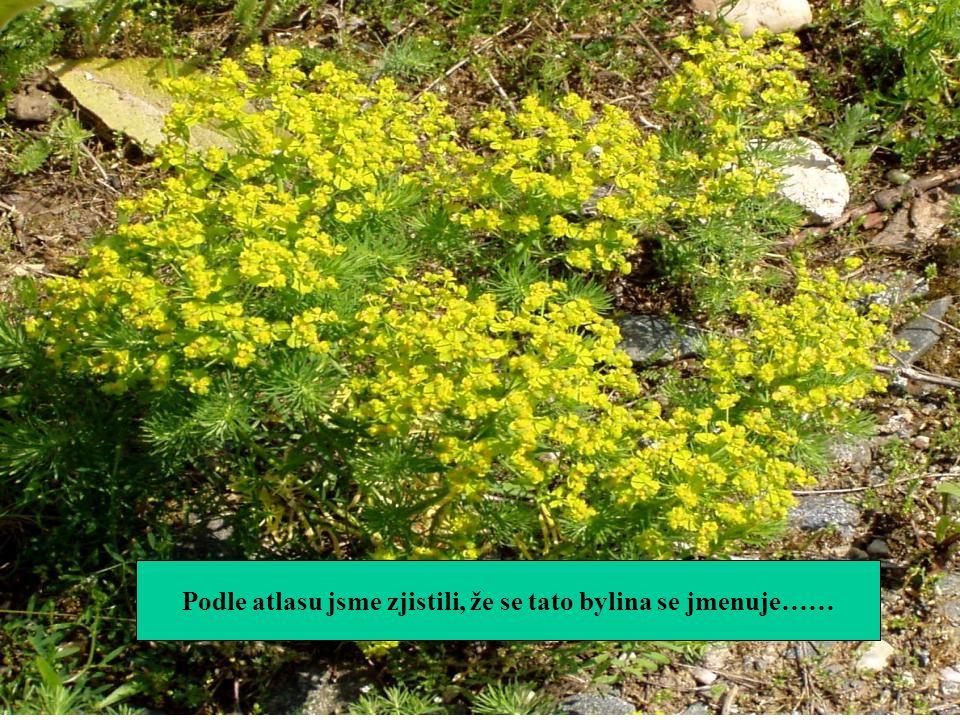 Podle atlasu jsme zjistili, že se tato bylina se jmenuje……