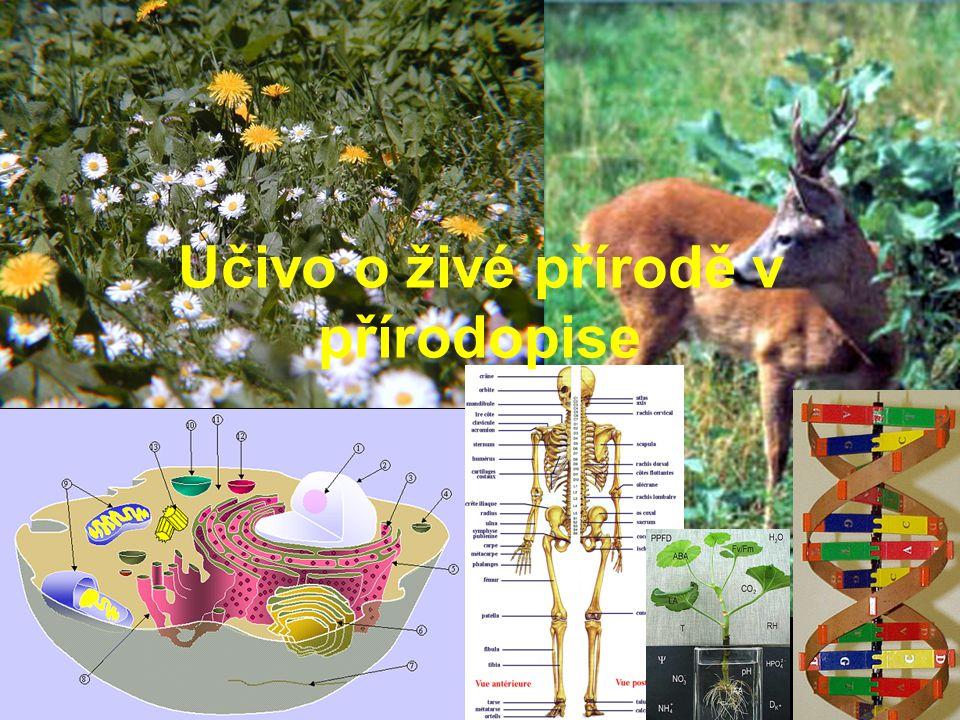 Učivo o živé přírodě v přírodopise