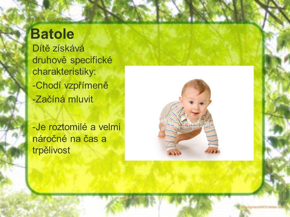 Batole Dítě získává druhově specifické charakteristiky: