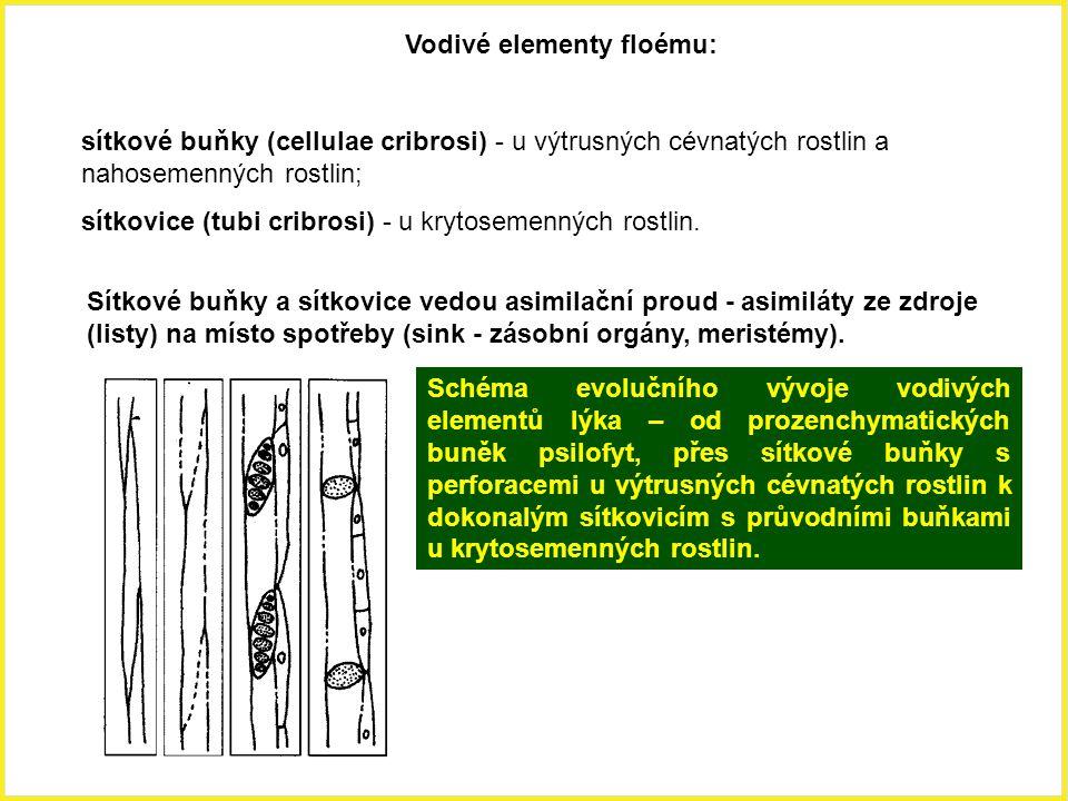 Vodivé elementy floému: