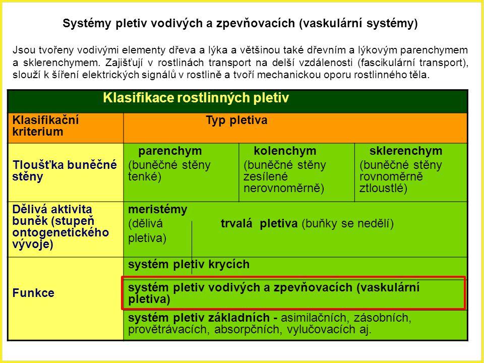 Systémy pletiv vodivých a zpevňovacích (vaskulární systémy)