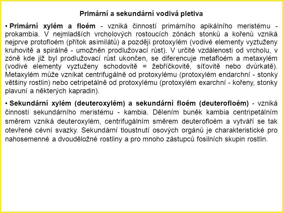 Primární a sekundární vodivá pletiva