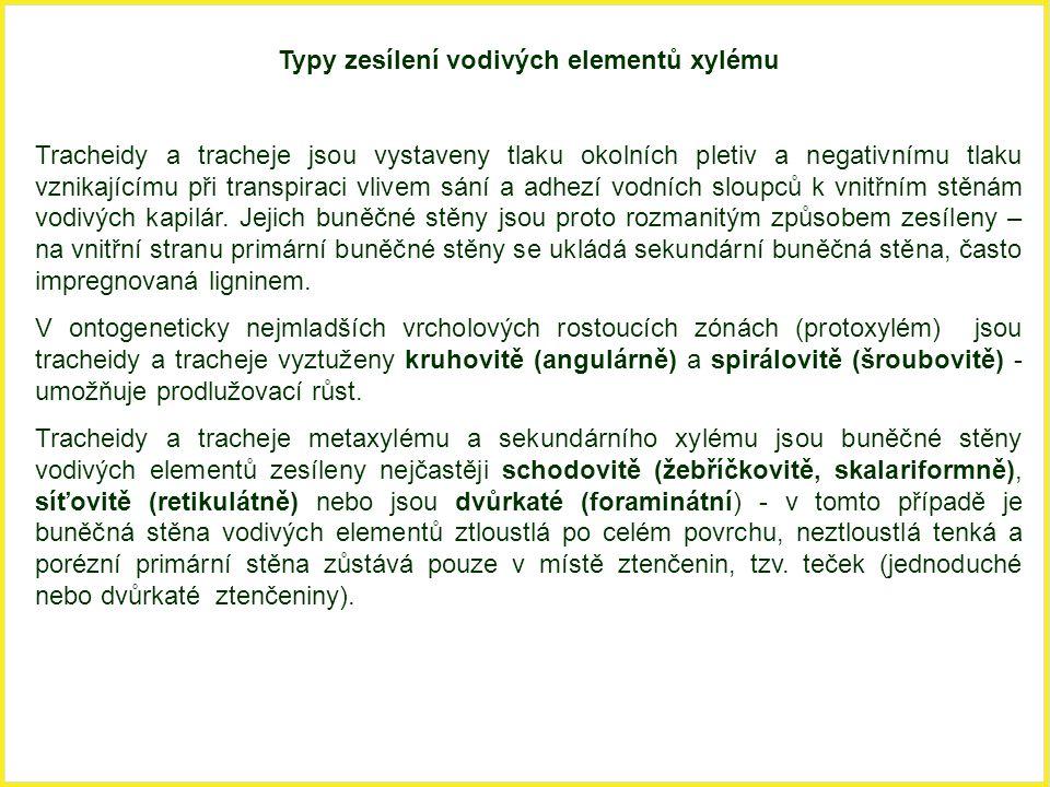 Typy zesílení vodivých elementů xylému