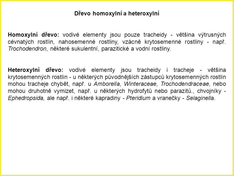 Dřevo homoxylní a heteroxylní