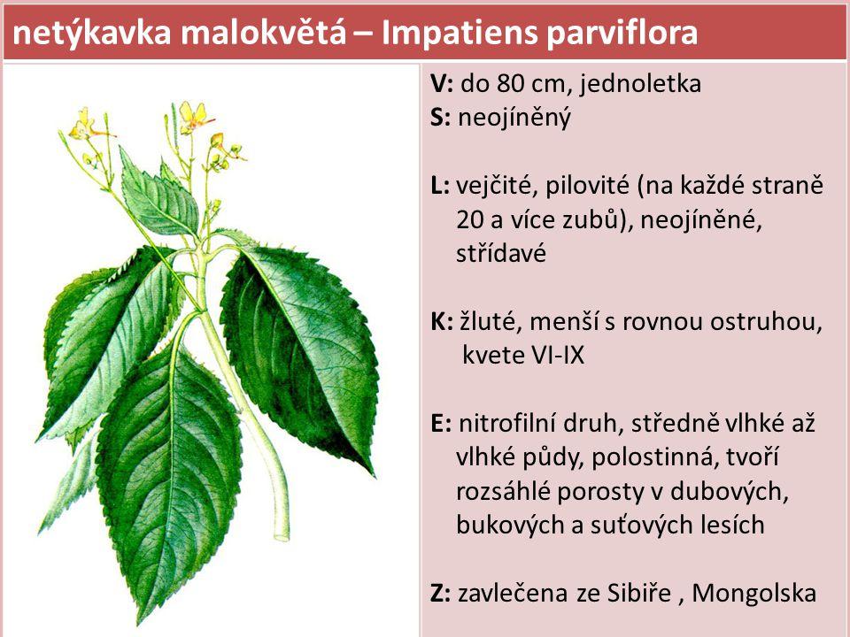 netýkavka malokvětá – Impatiens parviflora