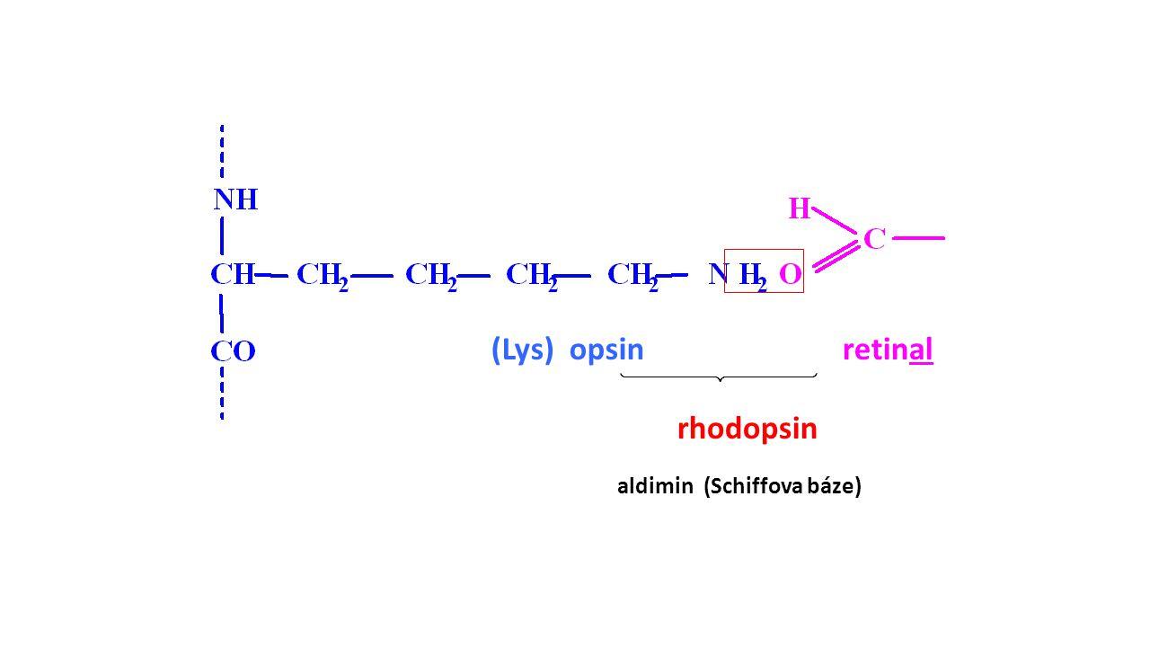 (Lys) opsin retinal  rhodopsin aldimin (Schiffova báze)