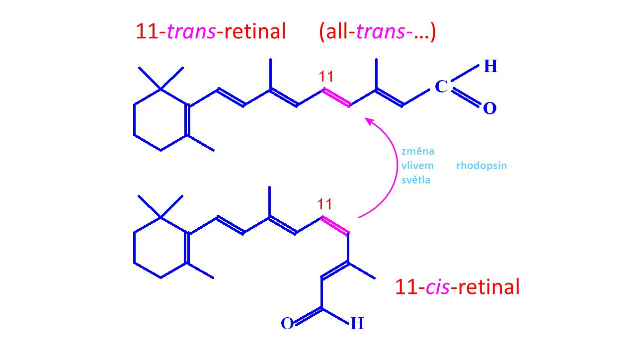 11-trans-retinal (all-trans-…)