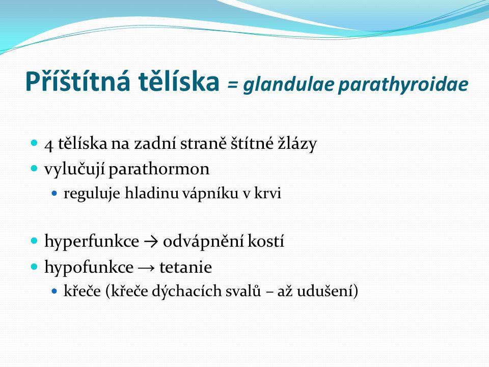Příštítná tělíska = glandulae parathyroidae