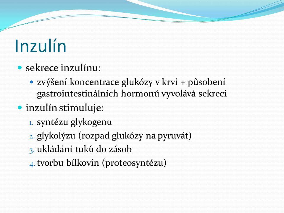 Inzulín sekrece inzulínu: inzulín stimuluje: