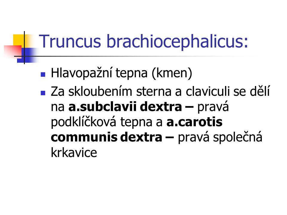 Truncus brachiocephalicus: