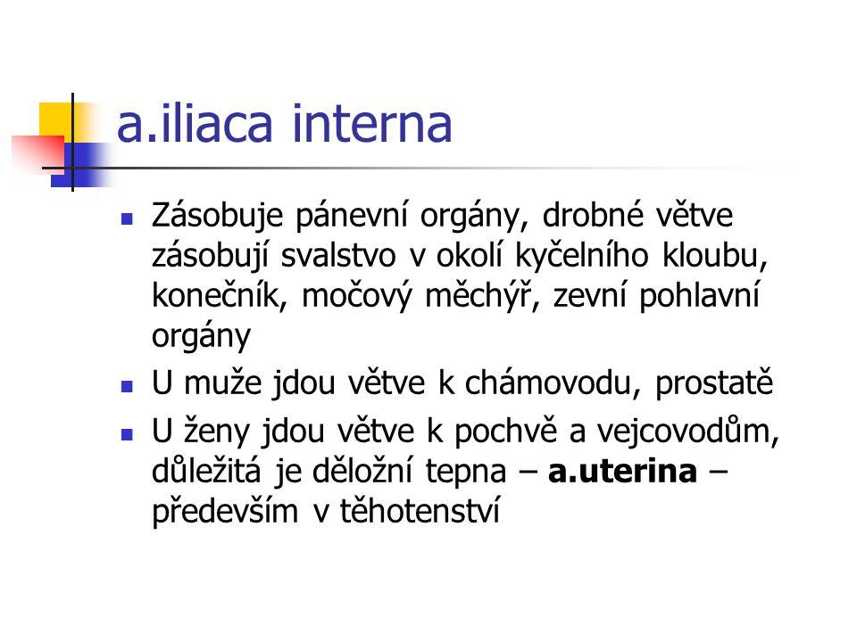 a.iliaca interna Zásobuje pánevní orgány, drobné větve zásobují svalstvo v okolí kyčelního kloubu, konečník, močový měchýř, zevní pohlavní orgány.