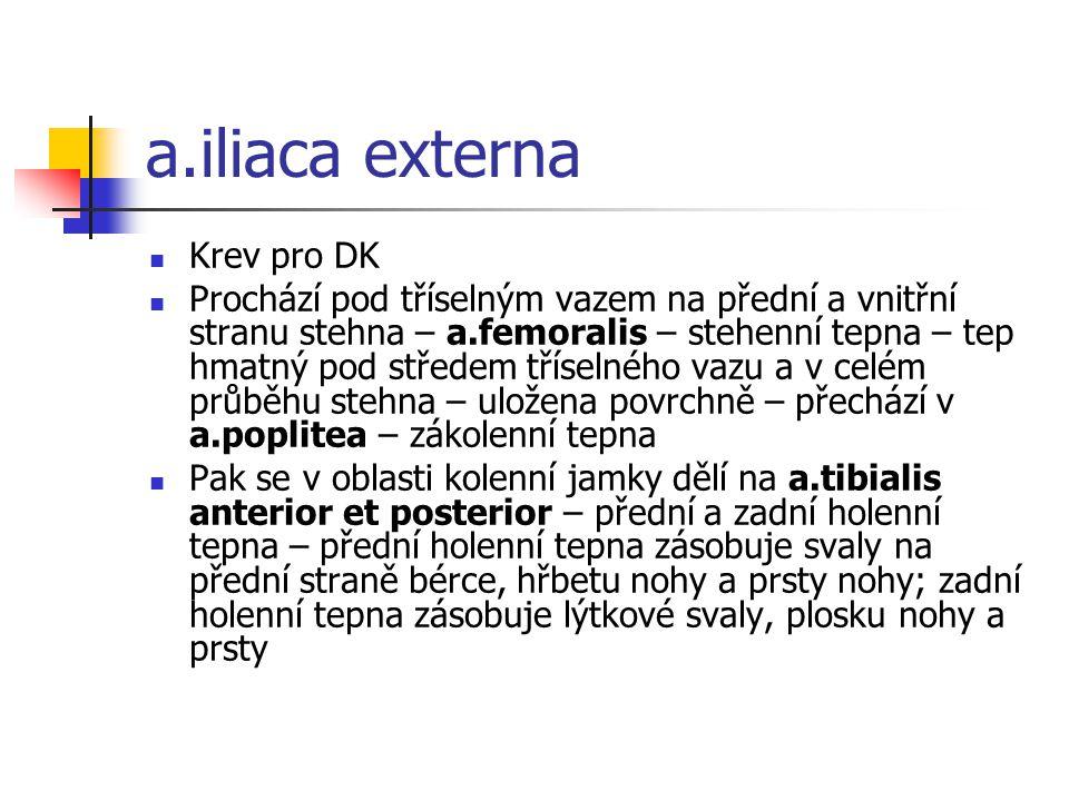 a.iliaca externa Krev pro DK