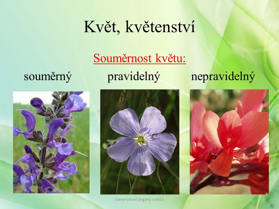 Květ, květenství Souměrnost květu: souměrný pravidelný nepravidelný