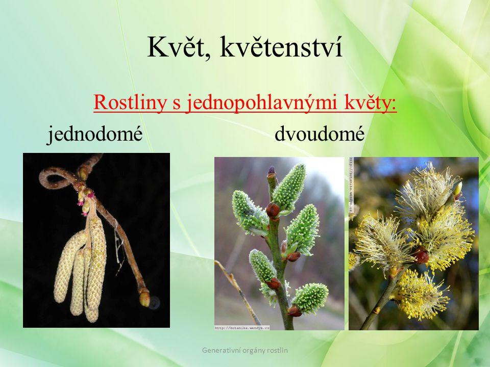 Květ, květenství Rostliny s jednopohlavnými květy: jednodomé dvoudomé