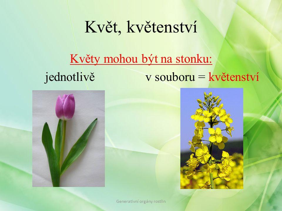 Květ, květenství Květy mohou být na stonku: jednotlivě v souboru = květenství Generativní orgány rostlin.