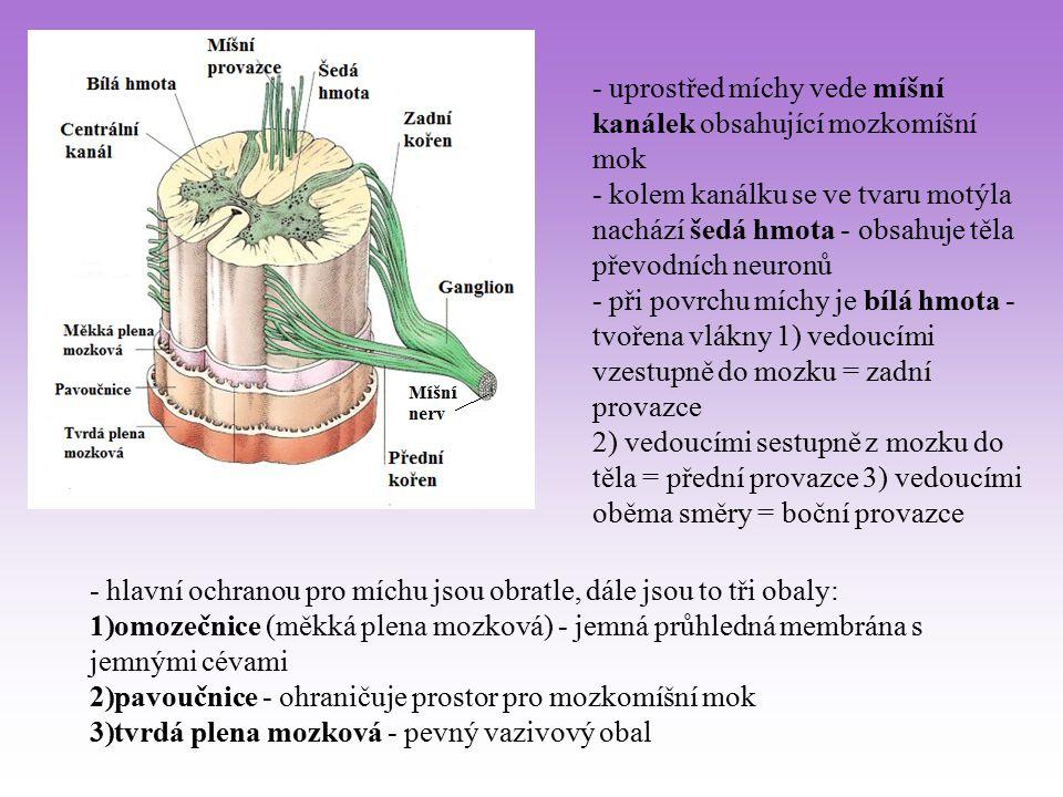 - uprostřed míchy vede míšní kanálek obsahující mozkomíšní mok