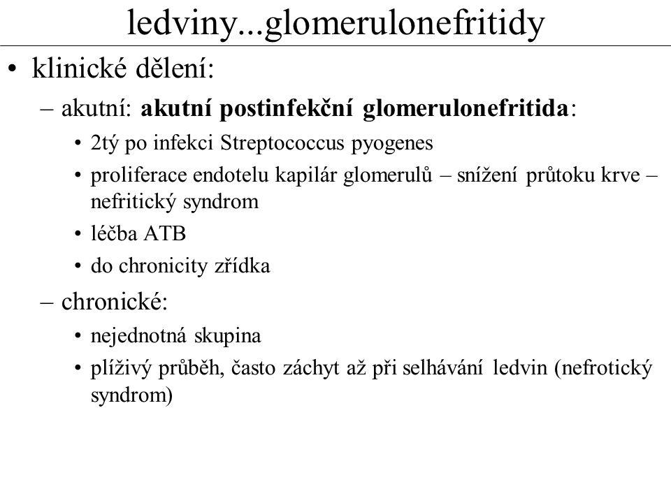 ledviny...glomerulonefritidy