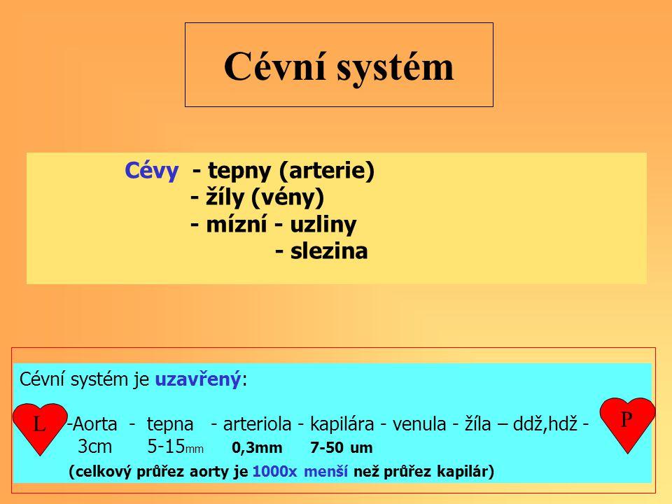 Cévní systém Cévy - tepny (arterie) - žíly (vény) - mízní - uzliny