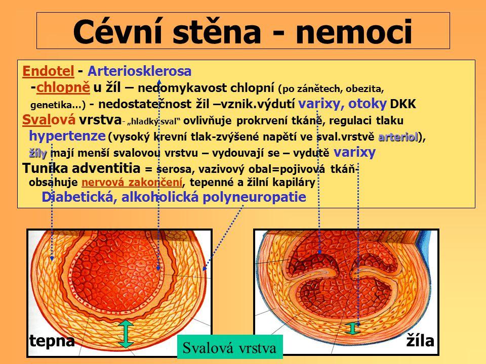 Cévní stěna - nemoci tepna žíla Svalová vrstva