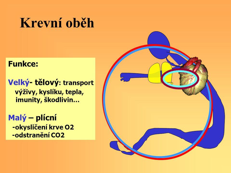 Krevní oběh Funkce: Velký- tělový: transport výživy, kyslíku, tepla,