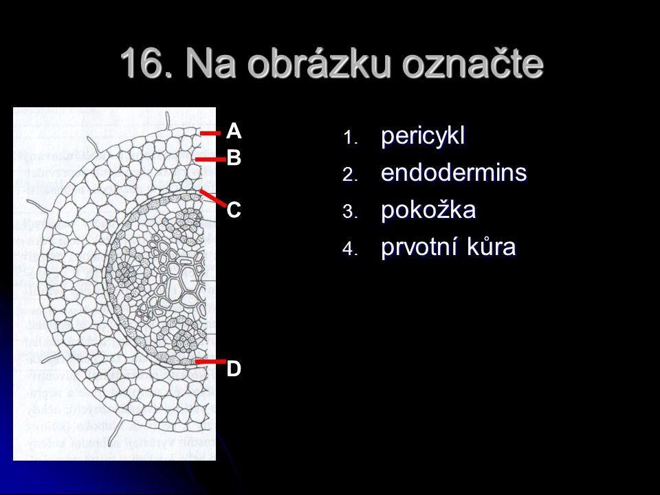 16. Na obrázku označte pericykl endodermins pokožka prvotní kůra A B C