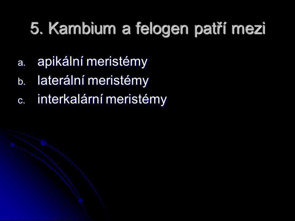 5. Kambium a felogen patří mezi