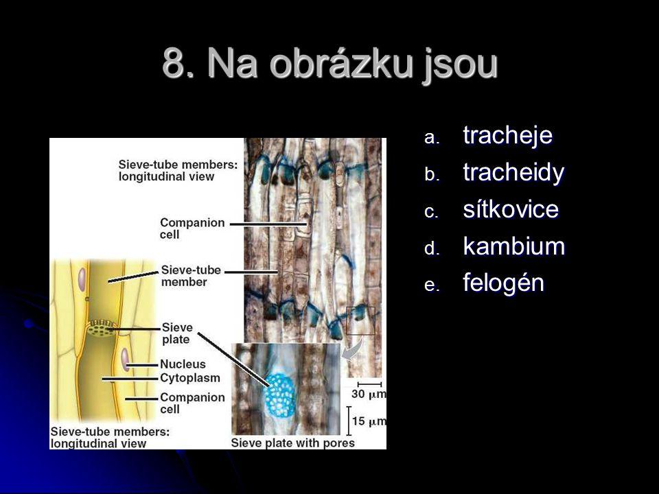 8. Na obrázku jsou tracheje tracheidy sítkovice kambium felogén