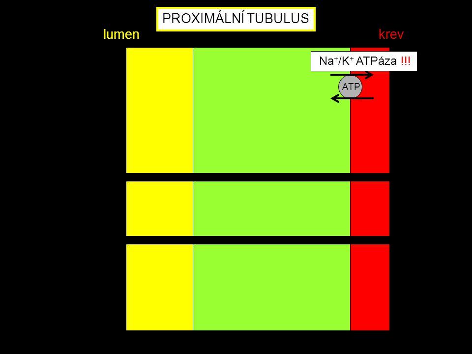 PROXIMÁLNÍ TUBULUS lumen krev Na+/K+ ATPáza !!! ATP