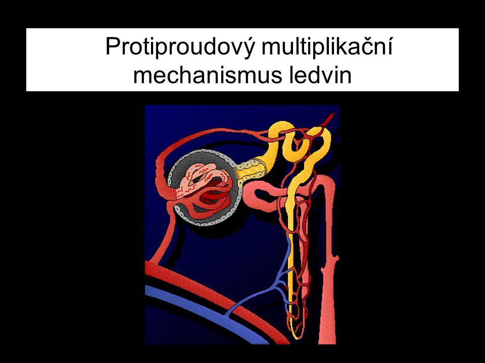 Protiproudový multiplikační mechanismus ledvin