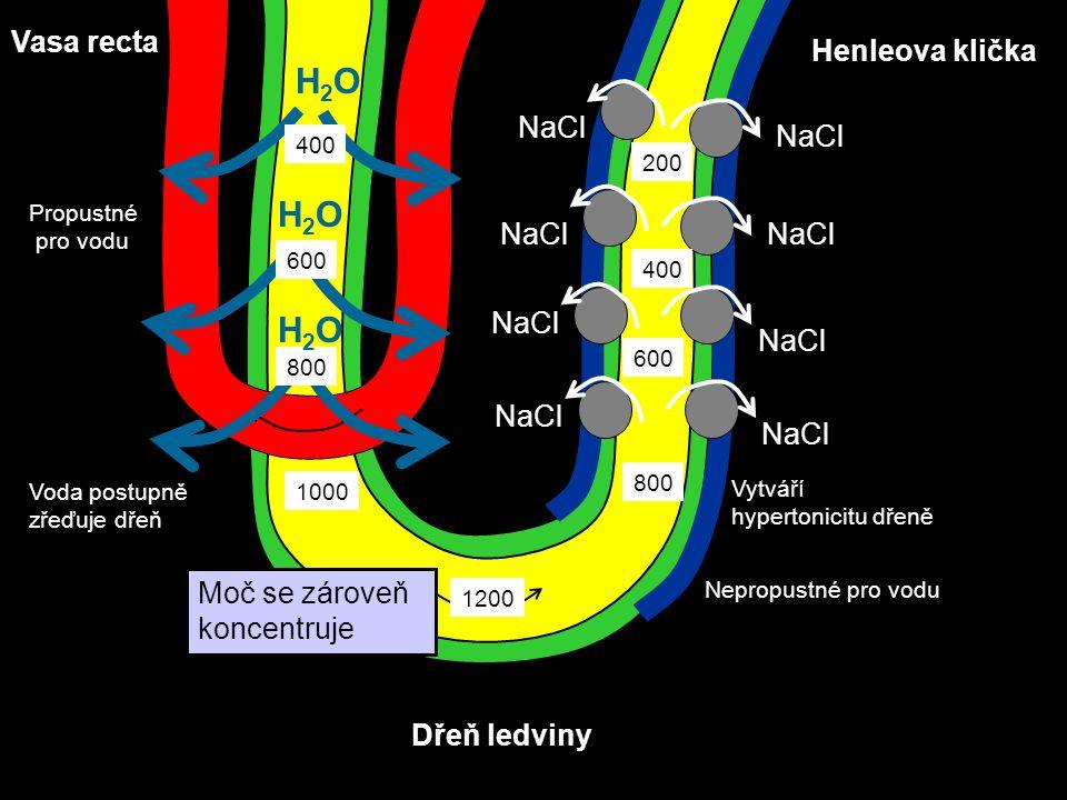 H2O H2O H2O Vasa recta Henleova klička NaCl Moč se zároveň koncentruje