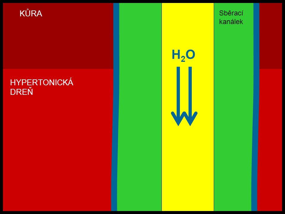 KŮRA Sběrací kanálek H2O HYPERTONICKÁ DREŇ