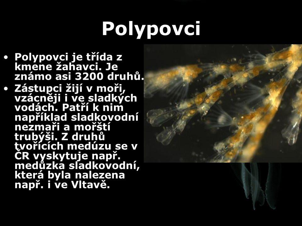 Polypovci Polypovci je třída z kmene žahavci. Je známo asi 3200 druhů.