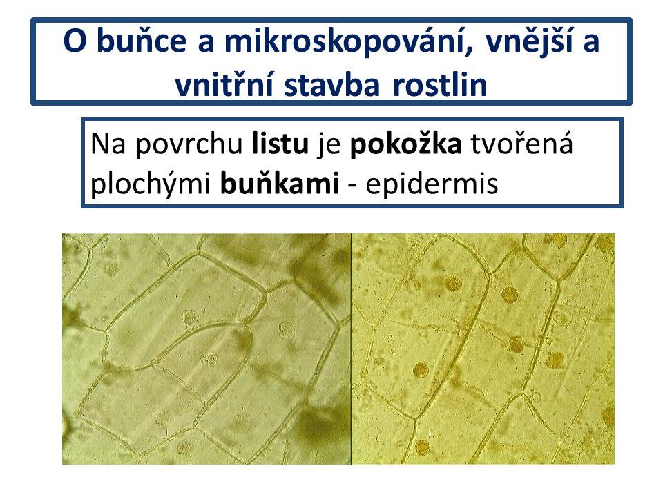 O buňce a mikroskopování, vnější a vnitřní stavba rostlin