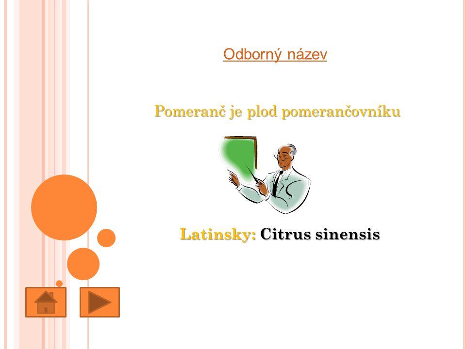 Odborný název Pomeranč je plod pomerančovníku Latinsky: Citrus sinensis