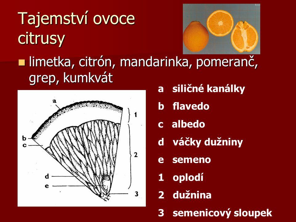 Tajemství ovoce citrusy