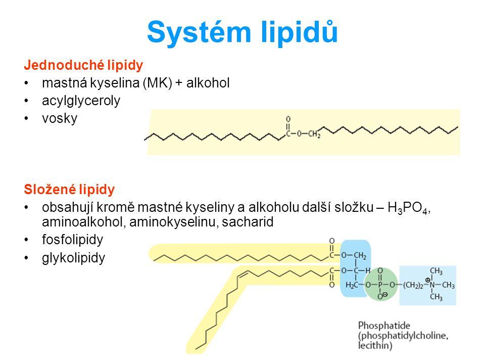 Systém lipidů Jednoduché lipidy mastná kyselina (MK) + alkohol