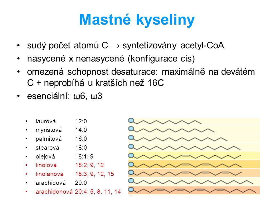 Mastné kyseliny sudý počet atomů C → syntetizovány acetyl-CoA
