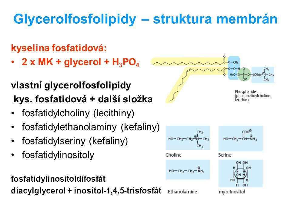 Glycerolfosfolipidy – struktura membrán