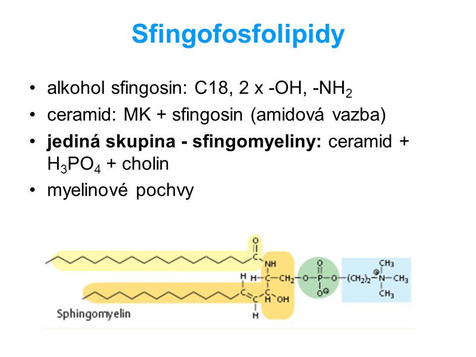 Sfingofosfolipidy alkohol sfingosin: C18, 2 x -OH, -NH2