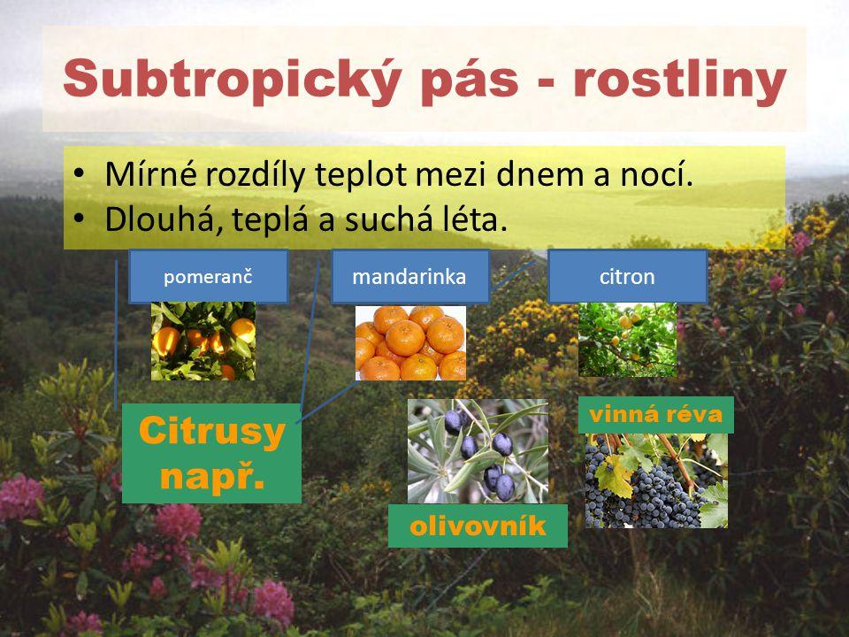 Subtropický pás - rostliny