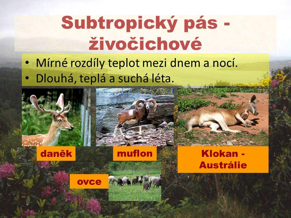 Subtropický pás - živočichové