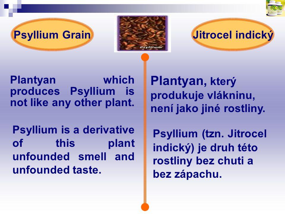 Plantyan, který produkuje vlákninu, není jako jiné rostliny.